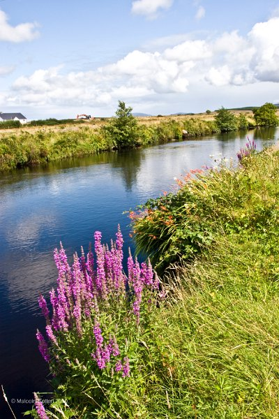 Donegal/Flowers beside the Owenea river, Co. Donegal